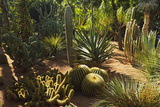 The Majorelle Gardens  Marrakesh  Morocco  North Africa  Africa