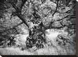 Portrait of a Tree  Study 1