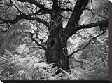 Portrait of a Tree  Study 12