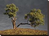 Split Oak Tableau sur toile par David Winston