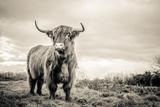 Les Highlands Papier Photo par Mark Gemmell