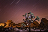 Star Trails over Joshua Trees and Granite Formations in the Desert