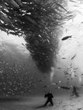 A School of Fish Circle Divers in the Sea of Cortez, Mexico. Papier Photo par Christian Vizl