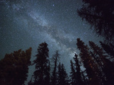The Milky Way Shines Above the Forest in the San Juan Mountains of Southern Colorado