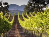 Arroye Grande  California: a Central Coast Winery