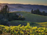 Healdsberg  Sonoma County  California: Vineyard and Winery at Sunset