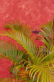 Palm Tree Against Colorful Stucco Wall  Cozumel  Mexico