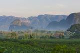 Limestone Hill  Farmland  Vinales Valley  UNESCO World Heritage Site  Cuba