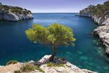 Pin solitaire grandissant en dehors de la roche, Calanques près de Cassis, Provence, France Papier Photo par Brian Jannsen