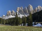 Geisler Mountains Valley Villnoess  Spring-Crocus  Dolomites  South Tyrol  Italy