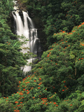 Nanue Falls  Alexandra Palms and African Tulip Trees  Hawaii  USA