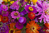 Bouquet of Colorful at a Farmers' Market  Savannah  Georgia  USA