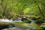 Cascading Creek, Great Smoky Mountains National Park, Tennessee, USA Papier Photo