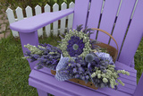 Dried Lavender on Purple Chair at Lavender Festival  Sequim  Washington  USA