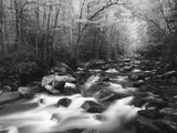 Canopy over Big Creek  Great Smoky Mountains National Park  North Carolina  USA