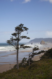 Cannon Beach and Haystack Rock  Oregon  USA