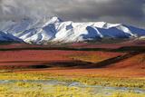 Alaska Range  Autumn  Taiga  Denali National Park  Alaska  USA