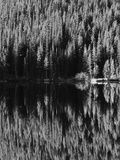 Lodgepole Pines Along Bear Lake  Rocky Mountains National Park  Colorado  USA