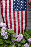 Hydrangeas with American Flag  Block Island  Rhode Island  USA