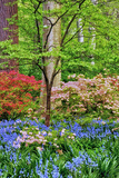 Blooming Azaleas and Bluebell Flowers  Winterthur Gardens  Delaware  USA