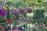 Butchart Gardens in Full Bloom  Victoria  British Columbia  Canada