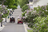 Lilac Lined Street with Horse Carriage  Mackinac Island  Michigan  USA
