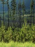 Wallowa National Forest  Hells Canyon National Recreation Area  Oregon  USA