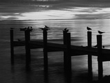 View of Birds on Pier at Sunset  Fort Myers  Florida  USA
