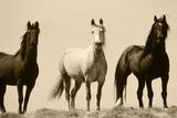 Wild Stallion Horses, Alkali Creek, Cyclone Rim, Continental Divide, Wyoming, USA Papier Photo par Scott T. Smith