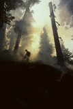 Forest Fire  Sequoia and Kings Canyon National Park  California  USA