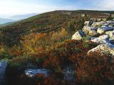 Bear Rocks  Dolly Sods Wilderness Area  Monongahela National Forest  West Virginia  USA