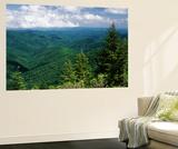 Pisgah National Forest  North Carolina  USA