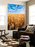 Wheat Field  Oregon  USA