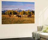 Horses on Moran Junction at Grand Teton National Park  Wyoming  USA
