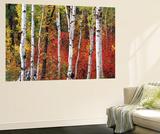 Trees in Autumn  Black Hill Area  Custer State Park  South Dakota  USA