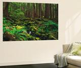 Rainforest  Mossy Rocks  Mt Rainier National Park  Washington  USA