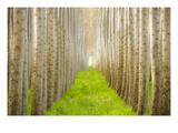 Poplar Grove 1