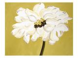 White Flower on Ochre