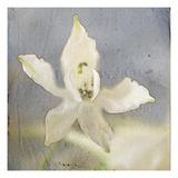 White Flower 3