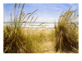 Dune Grass 3