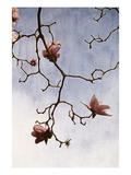 Tulip Magnolia 2