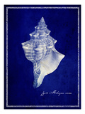 Conch Shell Photo premium par GI ArtLab
