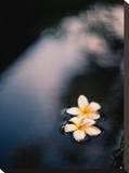 Tranquil Fountain  Kuta Bali