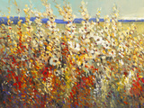 Field of Spring Flowers II Reproduction d'art par Tim O'toole