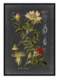 Midnight Botanical I Reproduction d'art par Vision Studio