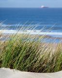 Elyme des sables