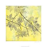 Fluttering Maple I