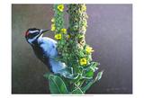 Woodpecker Mullen