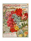 Seed Catalog Captions (2012): John A Salzer Seed Co La Crosse  Wisconsin  Autumn 1895