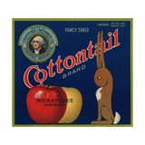 Warshaw Collection of Business Americana Food; Fruit Crate Labels  Stratford Orchards Co